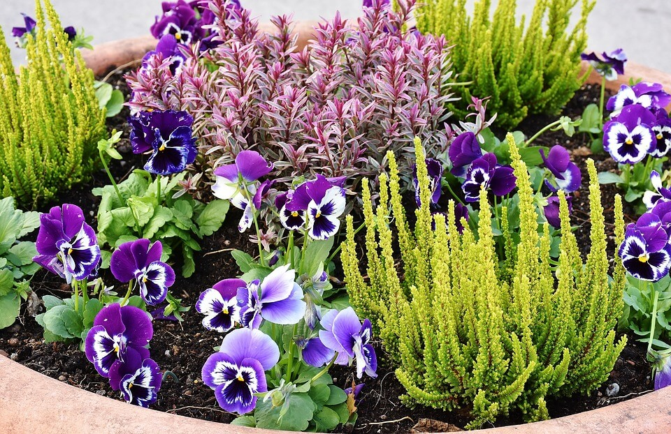 Plant designer